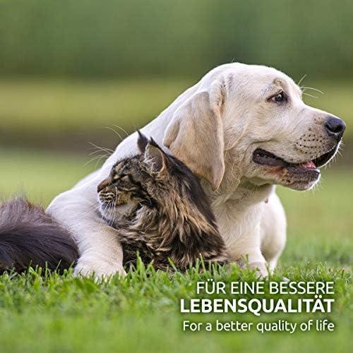 AniForte Poudre de moule à lèvres vertes pour chiens et chats 250g - Poudre naturelle de moule à lèvres vertes en qualité grasse, glycosaminoglycanes 3,3%, soutient les fonctions articulaires