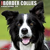 Just Border Collies 2016 Calendar