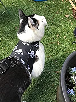 Mynwood Cat Jacket arnés para gato adulto con diseño de calaveras, a prueba de fugas: Amazon.es: Productos para mascotas