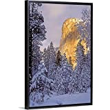 Best California-sunflower-seeds - Dave Welling Floating Frame Premium Canvas with Black Review