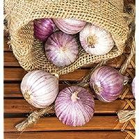 A. 10 Bulb : Single Clove Garlic Solo Garlic Heirloom Bulbs Seed Herbal Control Cholesterol