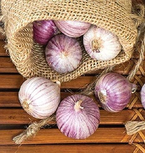 Las semillas orgánicas: B. 25: Individual Solo clavo de la ...