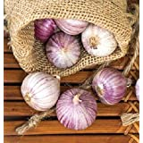 Organic Seeds: B. 25: Single Clove Solo Heirloom Seed Control Cholesterol by Farmerly
