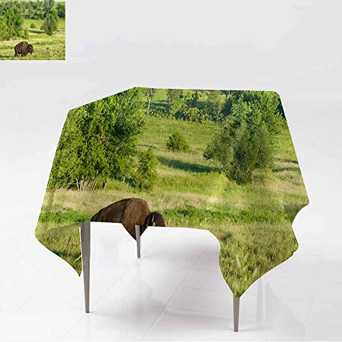 AFGG Water Resistant Table Cloth,Bison Crossing Grassland Landscape Near Prairie City Iowa,for Events Party Restaurant Dining Table Cover,60x60 Inch