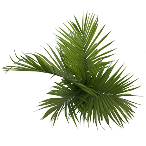 Costa Farms Majesty Palm Tree, Live Indoor Plant, 3 to 4-Feet Tall, Ships in Grow Pot, Fresh From Our Farm, Excellent Gift by Costa Farms (Image #2)
