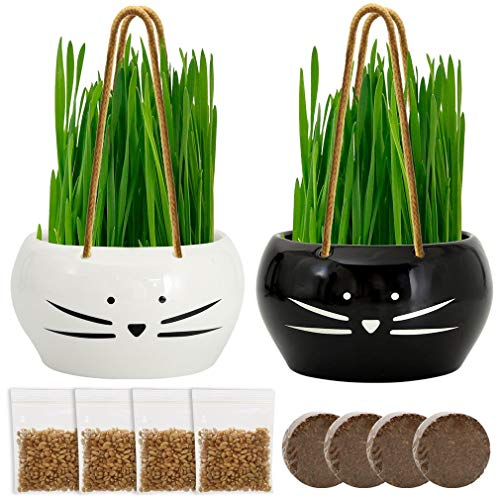 Koolkatkoo Cat Grass Kit Hanging Planter Set for Cats Ceramic Flower Pots Grass Black and White