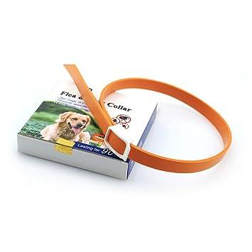 Bellagione - Collar de protección para perros y gatos con extractos de plantas naturales: Amazon.es: Productos para mascotas