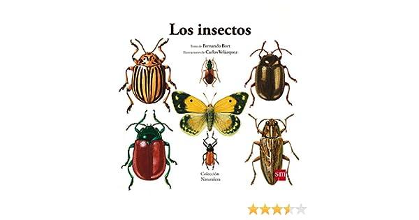 Los insectos: 5 (Naturaleza): Amazon.es: Bort Misol, Fernando, Velázquez, Carlos: Libros