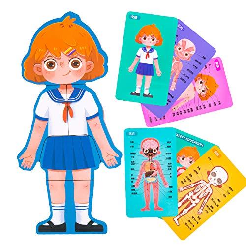RAINBOW TOYFROG RainbowToyFrog Human Anatomy Puzzle Set Girls - Body Parts for Kids & Toddlers - 36 Pcs Each Set, Ages 3+