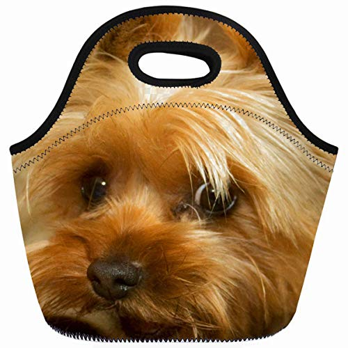 - Ahawoso Reusable Insulated Lunch Tote Bag Popular Presents Wait For Mom Love Haley Dog Yorkie Terrier Zippered 10X11 Neoprene School Picnic Gourmet Lunchbox