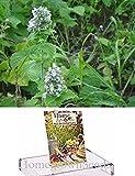 Homegrown Packet Catnip Seeds, 2000 Seeds, Organic Catnip