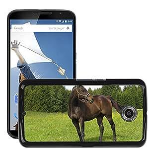 Hot Style Cell Phone PC Hard Case Cover // M00115681 Horses Animals Nature Ride Warmblut // LG Google Nexus 6