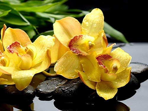 (Tollyee Yellow Zen Orchids Art Print On Canvas Wall Art for Home Decoration Wooden Framed 16