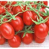 Red Plum Tomato 30 Seeds - Heirloom