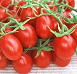 Red Plum Tomato 30 Seeds - Heirloom
