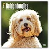 Goldendoodles 2018 12 x 12 Inch Monthly Square Wall Calendar, Animals Mixed Dog Breeds