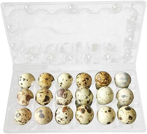 UPKOCH 50 unidades 18 rejillas estuches para huevos de codorniz huevera con tapa caja para huevos de plástico caja para guardar los huevos para frigorífico: Amazon.es: Hogar