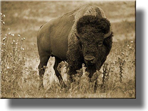 Buffalo Wall Art - American Buffalo Picture, Made on Stretched Canvas, Wall Art Décor, Ready to Hang!