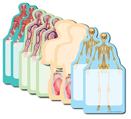 Anatomy Body Sticky Notes Collection, 9 Pack-100 Sheets Per Pack, Medical Note Pads and Great Gifts. -