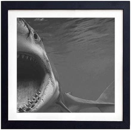 Poster Wall Art Home Decor Big Shark  Art//Canvas Print C