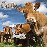 Cows Calendar
