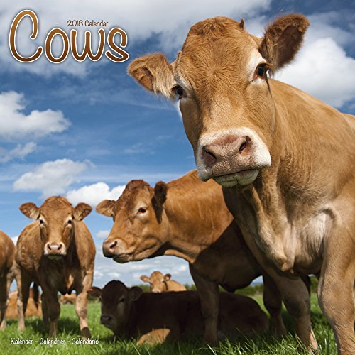 Cows Calendar - Calendars 2017-2018 Wall Calendars - Animal Calendar - Cows 16 Month Wall Calendar by Avonside