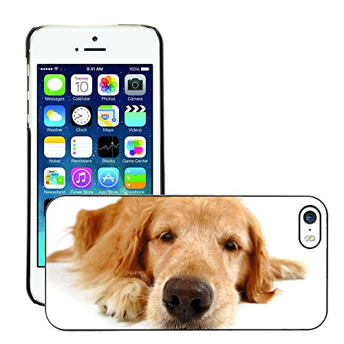 Premio Sottile Slim Cassa Custodia Case Cover Shell // V00002231 funny dog // Apple iPhone 5 5S 5G