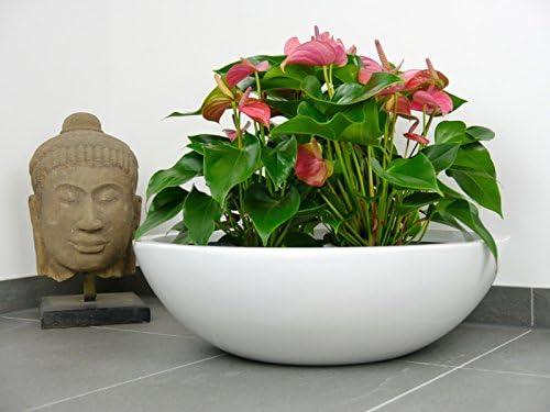 One LARGE Ceramic Flower Plant Pot Planter 20cm Tall WHITE