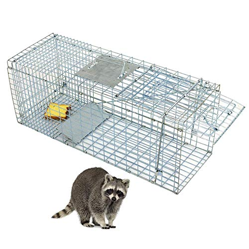 HomGarden Live Animal Trap Catch Release Humane Rodent Cage for Rabbits, Groundhog, Stray Cat, Squirrel, Raccoon, Mole, Gopher, Chicken, Opossum & Chipmunks Nuisance - Cage Trap Raccoon