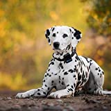Tractive 3G GPS Dog Tracker - Dog Tracking Device