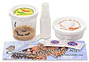 5 Live Caterpillars Shipped Now- Butterfly Kit Refill