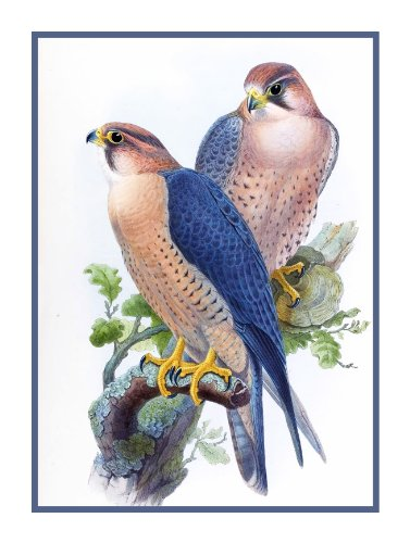 Peregrine Falcon by Naturalist John Gould Birds Counted Cross Stitc...