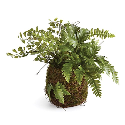 "Napa Home & Garden CC 8"" Mix Fern Rustic Drop in, 8x8x8 Inches"