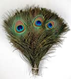 Kayso Peacock Feathers, 10-inch - 12-inch, 50 Pieces