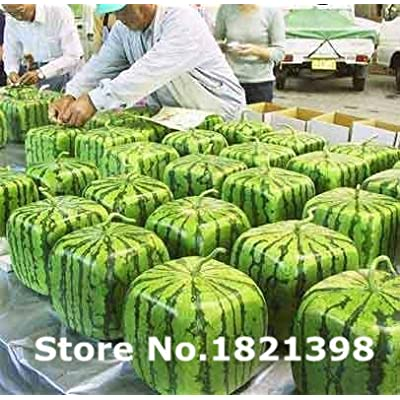 Garden Plants 20pcs Square Watermelon Seeds Very Sweet Fruit Seeds With Plant Instructions : Garden & Outdoor
