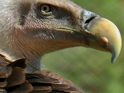 Africa - Gull Circle
