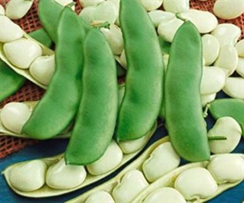 - Henderson Bush Lima Beans - 20 Seeds - COMBINED S/H!