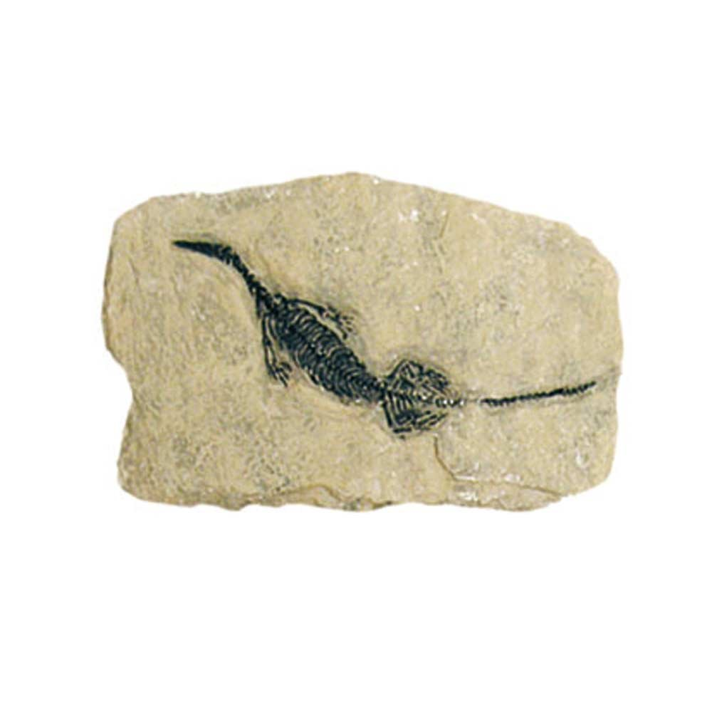 /Dig /& Discover Fossil Replica Marine Reptile Geoworld cl080/K/
