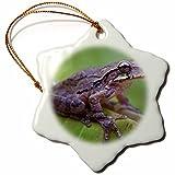3dRose Danita Delimont - Frogs - Common Mexican tree frog, Baudini smilisca, Costa Rica - 3 inch Snowflake Porcelain Ornament (orn_258574_1)