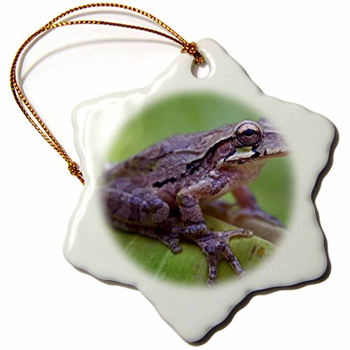 3dRose Danita Delimont - Frogs - Common Mexican tree frog, Baudini smilisca, Costa Rica - 3 inch Snowflake Porcelain Ornament (orn_258574_1) by 3dRose