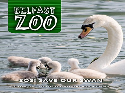 (SOS! Save Our Swan)