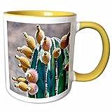 3dRose Danita Delimont - Cacti - Pachycereus pringlei, Cardon cactus, Baja, Mexico - SA13 MWI0044 - Mark Williford - 11oz Two-Tone Yellow Mug (mug_141611_8)