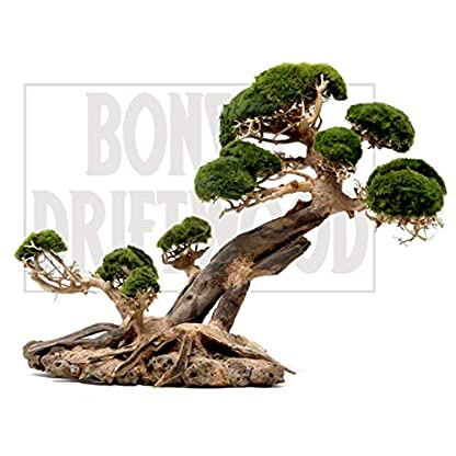 Bonsai Driftwood Aquarium Tree Tn 13 Inch Height 18 Inch Length Natural Handcrafted Fish Tank Decoration Helps The Best Driftwood