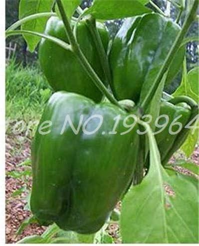 vegherb Grün 1: Neue 100 PC/Beutel Hot Chili S Reaper Bonsai Gemüseregenbogen-Paprika Topf Home Garten Easy Grow Green 1 (Seeds Only)