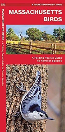 Massachusetts Birds: A Folding Pocket Guide To Familiar Species (A Pocket Naturalist Guide)