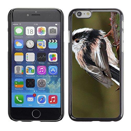 "Premio Sottile Slim Cassa Custodia Case Cover Shell // F00014889 oiseau // Apple iPhone 6 6S 6G 4.7"""