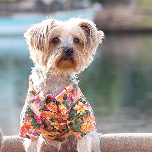 (DOGGIE DESIGN Hawaiian Camp Shirt (Sunset Hibiscus, XXL))