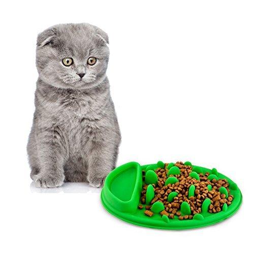 AlphaMY Collapsible Pet Supplies Feeding & Watering ware dog cat portable jungle style slow Bowl foldable silicone travel bowl, Green