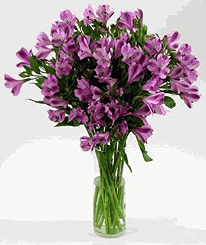 (Purple Alstroemeria Flowers - 12 Bunches of