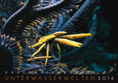 Unterwasserwelten 2014: Underwater Worlds 2014